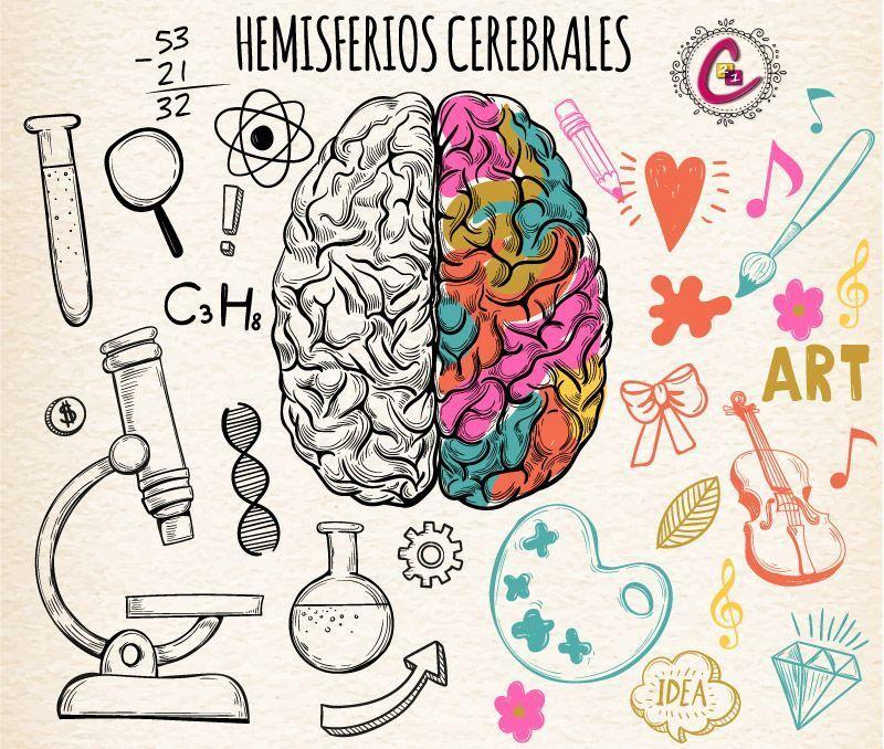 Los hemisferios cerebrales - Consulta 21 psicologos