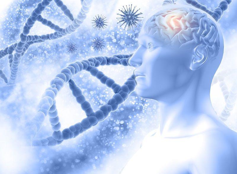 SHEC Sincronización de Hemisferios Cerebrales