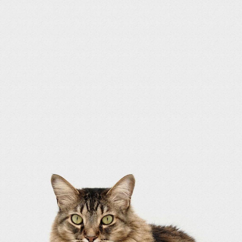 curiosidades miedo a los gatos